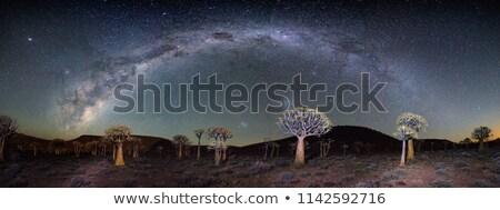 Gün batımı ağaçlar panorama Namibya gökyüzü bulutlar Stok fotoğraf © albertdw