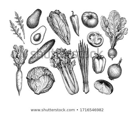 Jéghegy saláta stúdiófelvétel levelek rakéta egészséges Stock fotó © Digifoodstock
