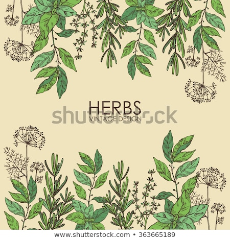 frame of basil leafs stock photo © zhekos
