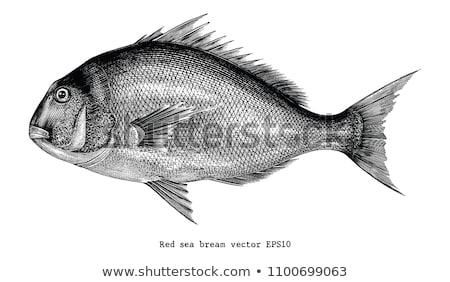 изолированный иллюстрация белый рыбы природы рыбалки Сток-фото © ConceptCafe