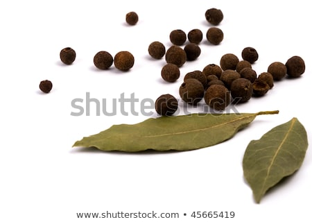 Fresh bay leaves and black peppercorns Stock photo © Digifoodstock