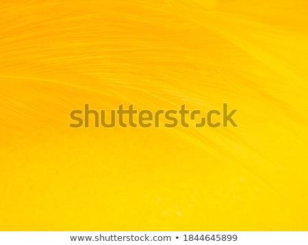 黄色 羽毛 白 ストックフォト © devon