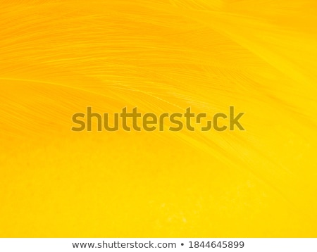 amarillo · pluma · dos · agradable · resumen - foto stock © devon