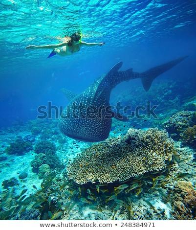 dalgıç · maske · tüp · plaj · spor · doğa - stok fotoğraf © orla