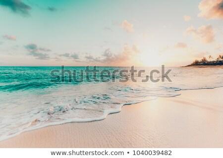 Tropische vintage strand landschap zomer caribbean Stockfoto © ixstudio