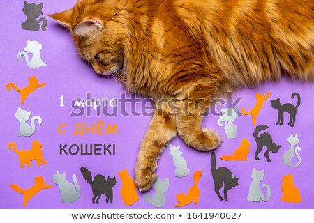 1 March cat day  Russian Stock photo © Olena