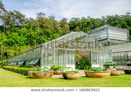 A green house growing leeks Stock photo © IS2