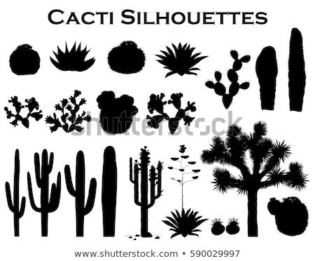 siluetas · cactus · negro · diferente · blanco · vector - foto stock © ratkom