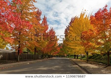 Sweetgum Trees Foliage Lined Street during Fall Season Stock photo © davidgn