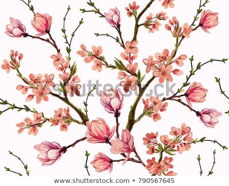 voorjaar · gras · blad · tuin - stockfoto © margolana