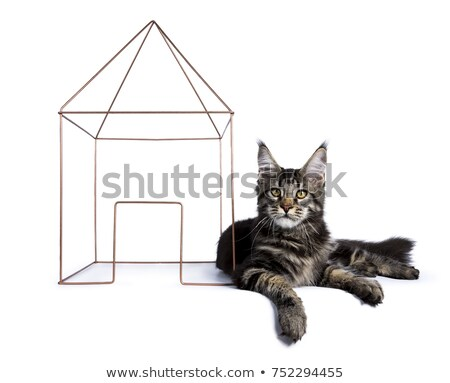 maine coon cat kitten laying with a wire house stock photo © CatchyImages