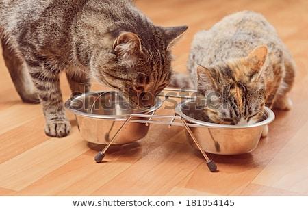 Gyömbér kiscica macska eszik aranyos fehér Stock fotó © Kurhan