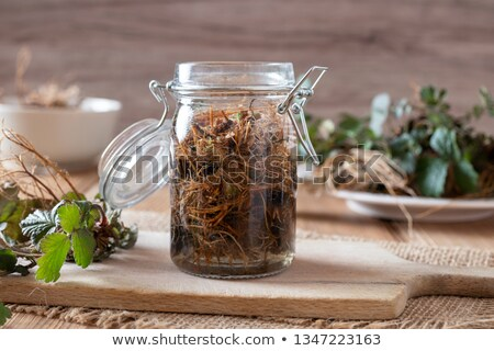 Preparation of Herb Bennet tincture from fresh roots Stock photo © madeleine_steinbach