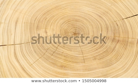 Tree Stump in the Sand Stock photo © craig