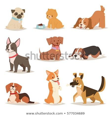 Marrom bassê cão desenho animado ilustração Foto stock © izakowski