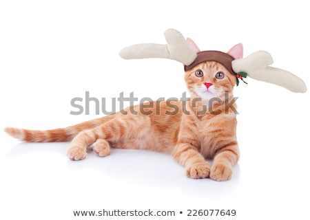 Christmas Cat with Rudolph  Stock photo © CatchyImages