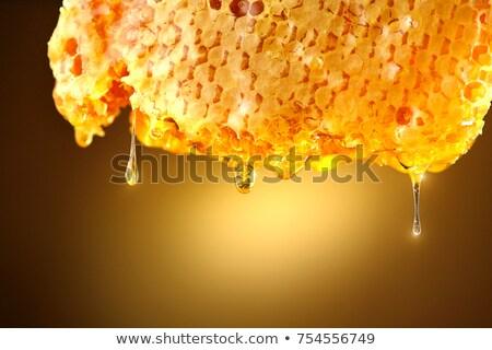 Bee Honeycomb Dripping with Honey Concept Stock photo © Krisdog