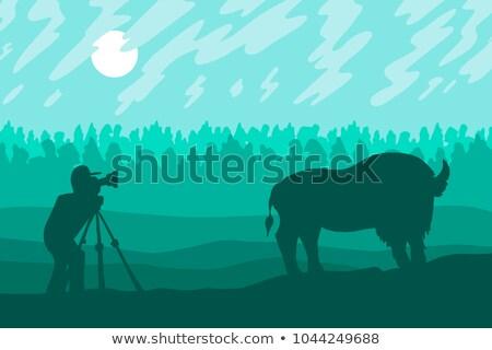 カメラマン 写真 バイソン 森林 リザーブ ベクトル ストックフォト © barsrsind