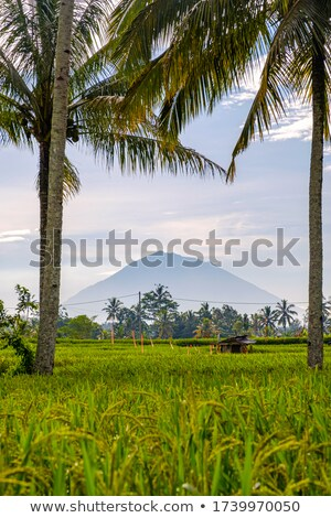 Landscape with green rice fields, palm trees and Agung volcano at sunny day in island Bali, Indonesi Stock photo © galitskaya