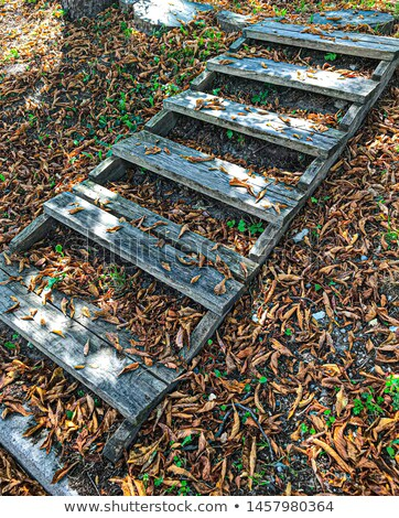 steps in golden autumn forest, tourist footpath. Stock photo © Lopolo