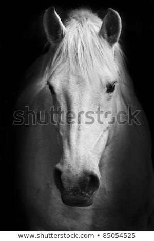 Black detailed eyelashes on white Stock photo © evgeny89