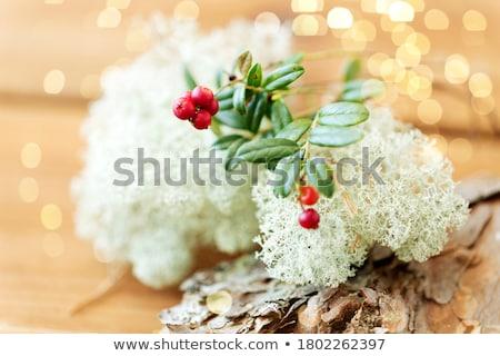 северный олень мох природы среде ботаника Сток-фото © dolgachov