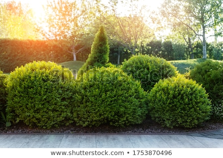 hedge and grass in autumn                                 Stock photo © Melvin07