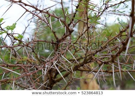 zöld · vad · növények · ragyogó · fény · természet - stock fotó © borna_mir
