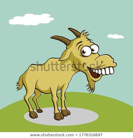 Head of a wild goat Stock photo © Arrxxx