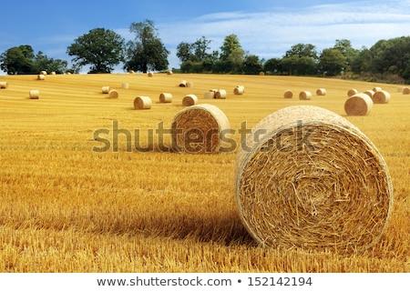 cevada · campo · colheita · tempo · trator - foto stock © stoonn