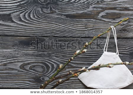 Catkins branches in a rustic wooden board. Stock photo © justinb