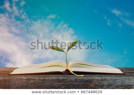 Kék könyv hajtás oktatás Stock fotó © devon