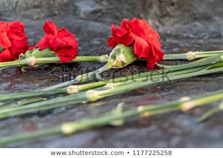 赤 クローブ 白 シルク 孤立した 光 ストックフォト © taden