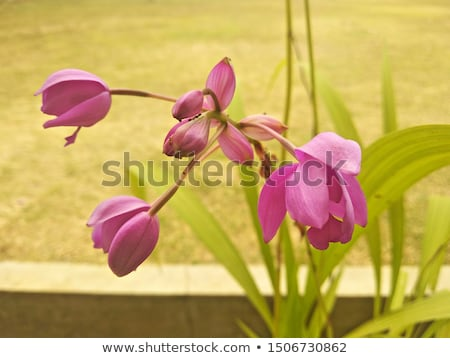 Orchidee kiem mieren macro verscheidene bloem Stockfoto © LAMeeks