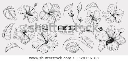 Ebegümeci örnek pembe çiçek doğa Stok fotoğraf © Dazdraperma