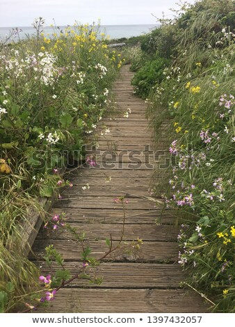 Flowers on coast Stock photo © hraska