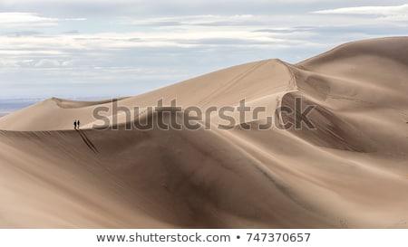 dűne · Szahara · sivatag · víz · fa · nap - stock fotó © andromeda