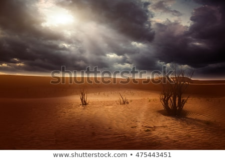 Sandy desert background Stock photo © Anna_Om