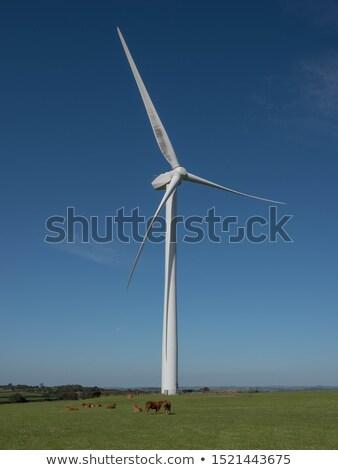 panorâmico · ver · vento · céu · grama · natureza - foto stock © stryjek