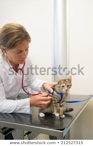 Veterinario examinar pequeño gato manos Foto stock © ivonnewierink