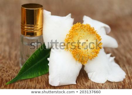 Fleur sous-continent indien blanche nature vert floral Photo stock © bdspn