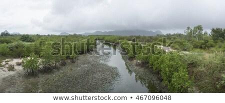 mocsár · erdő - stock fotó © wildnerdpix