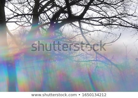 Albero rami prisma forme abstract inverno Foto d'archivio © sirylok