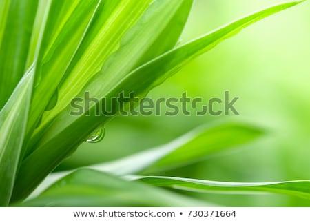Verde planta concretas sótano hierba pared Foto stock © Taigi