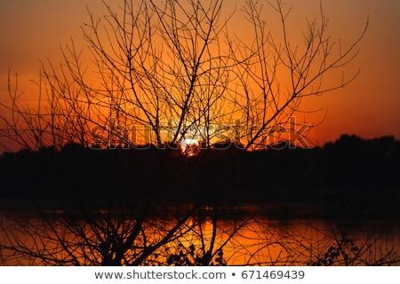 Ardiente puesta de sol silueta forestales nublado naturaleza Foto stock © Juhku