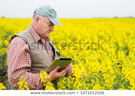 Landbouwer permanente bewerkt agrarisch handen veld Stockfoto © stevanovicigor