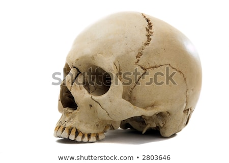 Homo sapience cranium isolated on white background Stock photo © shutswis