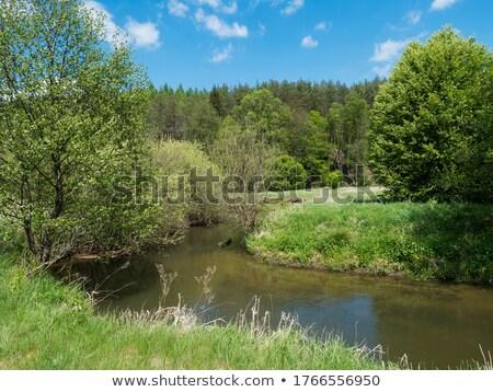 Córrego árvores blue sky belo rio caribbean Foto stock © Klinker