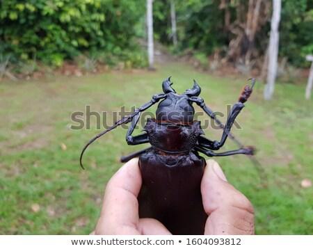 Bogár illusztráció tudomány állatok élet fej Stock fotó © bluering