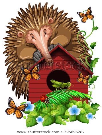 Hedghog over the birdhouse Stock photo © bluering